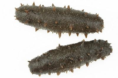 海生的作用与功效 食用海生的三大好处
